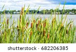 Foreground Cattail Plants Along ...