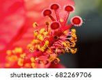 macro photograph of the... | Shutterstock . vector #682269706