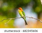 green orange yellow bird with...   Shutterstock . vector #682345606
