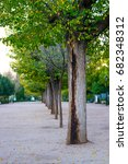 Small photo of Trees align at park near entrance Toledo city, Spain