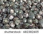 pile of agave pi as  ready to... | Shutterstock . vector #682382605