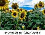 agricultural background of...   Shutterstock . vector #682420456