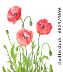 three garden poppies in... | Shutterstock . vector #682474696