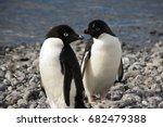 Paulet Island Antarctica  Pair...