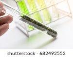 powder of cannabis  drugs  ... | Shutterstock . vector #682492552