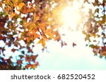 beautiful autumn leaves and sky ... | Shutterstock . vector #682520452