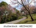 small road in the park have... | Shutterstock . vector #682546282