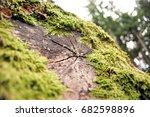 loire woods   Shutterstock . vector #682598896
