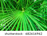 Round Spiky Palm Leaf In...