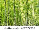 sunny summer and a birch wood... | Shutterstock . vector #682677916