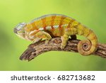 chameleon   studio captured... | Shutterstock . vector #682713682
