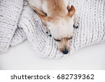 dog at home. domestic small... | Shutterstock . vector #682739362