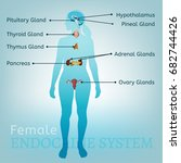 female endocrine system. human... | Shutterstock .eps vector #682744426