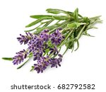 fresh lavender sprig with... | Shutterstock . vector #682792582