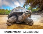 Stock photo galapagos islands galapagos tortoise big turtle ecuador 682808902