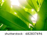 leaves green and yellow... | Shutterstock . vector #682837696