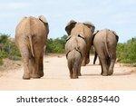 african elephant family   Shutterstock . vector #68285440
