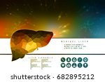 realistic human liver 2d... | Shutterstock . vector #682895212
