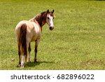 gelding horse looking back over ...   Shutterstock . vector #682896022