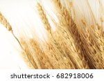 close up of cereal grain whole... | Shutterstock . vector #682918006