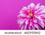 beautiful pink dahlia on a pink ... | Shutterstock . vector #682955842