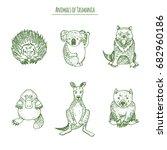 animals of tasmania  koala ... | Shutterstock .eps vector #682960186