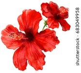 Stock photo red hibiscus flower tropical plants isolated watercolor illustration on white 683049958