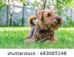 airedale terrier is a strong...   Shutterstock . vector #683085148