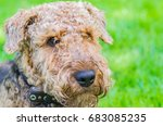 airedale terrier is a strong...   Shutterstock . vector #683085235