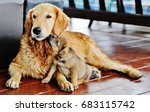 Stock photo dog and puppy 683115742