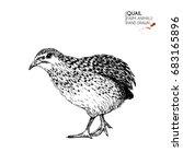 hand drawn set of farm animals.... | Shutterstock . vector #683165896
