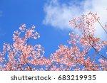 Branch Of Pink Sakura Flower...