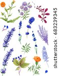 colorful floral collection with ... | Shutterstock . vector #683239345