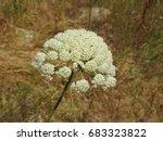 flower macro | Shutterstock . vector #683323822