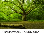 tree of life | Shutterstock . vector #683375365