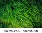 Green algae covered granite boulder in a riverbed. Background and texture. Swamp algae.
