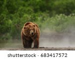 bear brown in kamchatka | Shutterstock . vector #683417572