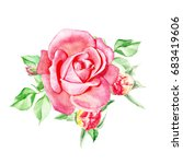 one pink rose with buds.... | Shutterstock . vector #683419606