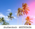 coco palm tree in pink light.... | Shutterstock . vector #683503636