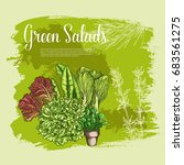 salads and lettuces vector... | Shutterstock .eps vector #683561275