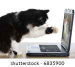 Stock photo cat pulls a paw to the laptop screen 6835900