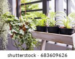 Small photo of Home and garden concept of english ivy plant in pot on the balcony