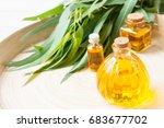 eucalyptus leaves  eucalyptus... | Shutterstock . vector #683677702