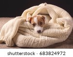little puppy taking rest in a... | Shutterstock . vector #683824972