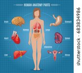 human anatomy parts infographic ... | Shutterstock .eps vector #683834986