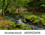 Forest Creek  Bohemian...