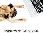 Stock photo top view of pug dog with laptop isolated on white 683919436