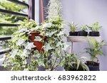 home and garden concept of... | Shutterstock . vector #683962822