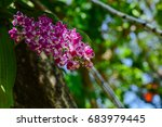 beautiful flowers on the trees... | Shutterstock . vector #683979445