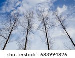 dead trees perennial with... | Shutterstock . vector #683994826
